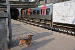 Waiting for  the subway... (VreSko) Tags: hamburg hh deutschland germany dog dogs hunde hund perro ubahn tube underground metro