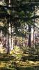 forstenrieder park 12/2017 (photos4dreams) Tags: weihnachten münchen 2017 smartphone photos4dreams p4d photos4dreamz forstenried wald forest trees tree baum bäume moos