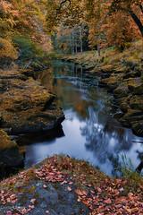 The Strid (peterwilson71) Tags: strid boltonabbey river autumn leaves woodland reflections still yorkshire nationalpark canon6d