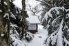 Das kleine Haus im Wald (berndtolksdorf1) Tags: deutschland thüringen triptis jahreszeit winter wald bäume haus schnee kalt outdoor