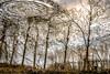 prayer (szélléva) Tags: reflection abstract prayer trees reflectivewater abstractnatur