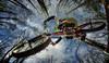Was man nicht alles macht für ein Foto (ellen-ow) Tags: fahrrad mountainbike sportarten sprung springen bäume himmel sky bike wald forrest computerbild luftsprünge ellenow nikond5