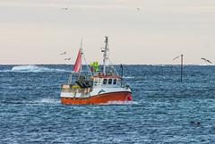 MS Rottfisk (Larsenio) Tags: ship ships sjø shoot sea seascape scandinavia skies seascapes skandinavia europe v view n norway norge north norvege nordic norwegen northern norsk nordland northernnorway norwegian nordnorsk norvegen ocean hav vinter winter 2018 båt andøy andenes arctic pentax pentaxk5 ricoh pentaxsmc fa300 ffa k5 kmount dslr e world