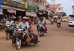 Live roosters, hens and ducks being transported (D70) Tags: kampongchnang kampongchhnang cambodia live hens ducks being transported roosters butcher move nikon d750 28300mm f3556 ƒ80 582mm 11000 1000