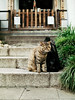 neko-neko2016 (kuro-gin) Tags: cat cats animal japan snap street straycat 猫 sigma dp2