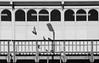 Berlin (mezitlab) Tags: berlin 2017 2017december canon canoneos600d 24mmpancake travel evs germany europe photography orsivarga rovar mezitlab bnw blackandwhite blackandwhitephotography bird street pigeon fly