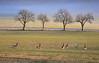Rehe vor die Linse gesprungen (Mariandl48) Tags: nebel rehe wiese obstbäume weg strasse sommersgut wenigzell steiermark austria