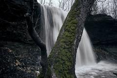 20180224DSC09477 (Todd Plunkett) Tags: plant water longexposure parks tree waterfall northamerica charlestonfallspreserve betheltownship ohio unitedstates usa