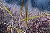 dead of winter (larrynunziato) Tags: abstarct natureabstract winter experimental photography