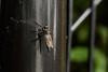 DSC_0582 (Hachimaki123) Tags: 日本 japan kyoto 京都 永観堂 eikando zenrinji 禅林寺 animal insect insecto 虫 動物