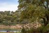 Carvalho na barragem (AMUMOT) Tags: tree oak barragem nature portugal alentejo