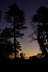 A clear start to a brand new day (Jacko004) Tags: 2018 january nikond5200 dawn sky trees dublin ireland