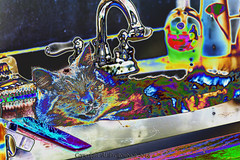 Ziggy in Sink (fishmonger45) Tags: cats photoshop greatphotographers
