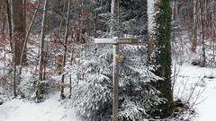 DENWEG (Daphne-8) Tags: tree pine tan den wegwijzer signpost richtungsschild wegweiser forest woods wald woud bos snow schnee sneeuw neve nieve neige forêt trees bäume bomen arbres arboles suisse switzerland svizzera svizra zwitserland schweiz winter hiver inverno invierno wanderweg hike wandelen