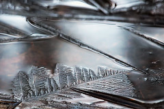 (cheryl.rose83) Tags: ice frozen massachusetts
