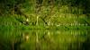 Breathe as One (Jimweaver) Tags: mirror nature kongfu yoga exercise pond lakeside taiwan taipei green water 池 湖 park path 公園 asia 植物 禪 太極 瑜珈 運動 鏡像 倒影