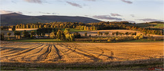 Aberdeenshire Fields and Trees (The Terry Eve Archive) Tags: stubble riverurie aberdeenshire scotland nescotland
