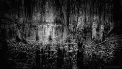 Sagesse Divine et les Anges de la Forêt (JDS Fine Art Photography) Tags: bw monochrome treespirits angels wisdom inspirational spiritual trees treeroots magical light magicallight beauty beautiful nature illumination divine divinewisdom