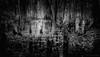 Sagesse Divine et les Anges de la Forêt (JDS Fine Art Photography) Tags: bw monochrome treespirits angels wisdom inspirational spiritual trees treeroots magical light magicallight beauty beautiful nature illumination divine divinewisdom