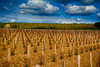 Graphisme dans les vignes Varoises (GerardMarsol) Tags: vignes rhône france nuages vin terroir graphisme ciel bleu