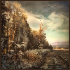 Rural landscape. (odinvadim) Tags: landscape igcaptureslandscapes iphoneonly winter iphoneart globetravel iphoneography specialist graphic mytravelgram distressedfx painterlymobileart iphone snapseed evening artist obninsk instapickskyart frost sunset travel textured forest editmaster textures