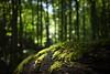 Light in the Dark Forest (Stefan Zwi.) Tags: moos wald forest green grün licht light bokeh