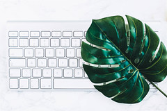 Minimalistic flat lay with key board and a green leaf (wuestenigel) Tags: lay leaf key wireless background modern office plant board flora pc isolated business white view flat electronic keyboard plants flower tool equipment text computer succulent table control top cup pot aluminum desktop object desk work mouse coffee internet