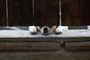 A Dog's life.. (CORDAN) Tags: 2018 cordan dmyers nikond500 rowdy dog buddy nikkor70200mmf28d rescuedog