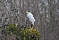 Heron (Hugo von Schreck) Tags: hugovonschreck reiher heron bird vogel canoneos5dsr tamronsp150600mmf563divcusda011