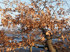 BS-Riddagshausen, Naherholungsgebiet (bleibend) Tags: 2018 bs braunschweig bsriddagshausen riddagshausen natur naturschutzgebiet nature naherholungsgebiet naherholung landschaftsschutzgebiet olympus omd em5 olympusomd olympusem5 mft m43 m43cameras leica leicasummilux25mmf14
