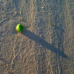 mangrove initiation (sculptorli) Tags: mangrove queensland australia abstract shadow beach пляж playa plage 红树 mangle 海滩 spiaggia ombra 阴影 澳大利亚 австралия тень