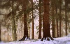 _silence (SpitMcGee) Tags: wald forest silence ruhe bäume trees schnee snow winter erinnerungen memories vater zuhause athome spitmcgee