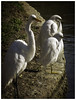 How is the Fishing Today, Boys? (karith) Tags: egrets greatwhiteegret snowyegrets lagoon alamedabayfarmisland lineup white birds karith on1