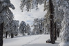 Snow at Troodos (127) (Polis Poliviou) Tags: snow nationalpark troodosmountains cypruscountryside clouds cloudy 2018 countryside freezing cyprus lovenature love naturepictures naturepics forest rural mount mountain mountains pinewood cold frost winter pinetrees pinetree mediterranean forestpark nationalforestpark olympus peak frozen morning environment nature ice snowtrees snowtree sports island cyprustheallyearroundisland cyprusinyourheart yearroundisland zypern republicofcyprus κύπροσ ©polispoliviou2018 polispoliviou polis poliviou πολυσ πολυβιου lovecyprus ski skateboard skiing skiers wood green earth canon