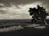 Lone Pine (jerrywb2010) Tags: idaho nationalparks landscape tree bw film filmscanned mamiya645 illfordfilm topaz