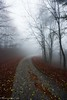 Fallen leaves path (Mavroudakis Fotis) Tags: autumn beech forest panoramic tree view background branch colors dawn dramatic dusk ecology environment evening fading fall fantasy fir flora nature outdoors serenity scenery autumnal greece kavala sustainability