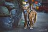 4/52 - dark morning... (yookyland) Tags: 52weeksfordogs 2018 misty 452 dog city street morning light stone wall texture