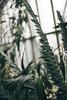 Around Edinburgh (calum.lewis) Tags: nikon edinburgh lakedistrict botanicalgarden mountains walking scotland stonecircle nikond3300 views city williamsonpark nationaltrust summer dslr wildlife flowersplants uk peakdistrict lancaster landscape urbanexploring castleriggstonecircle keswick colours nature lake
