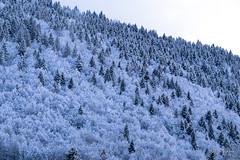 Fin de journée neigeuse en Chablais (MarKus Fotos) Tags: alpes alps chablais canon evian france f4 forêt gavot hautesavoie hiver fevrier bernex winter neige snow