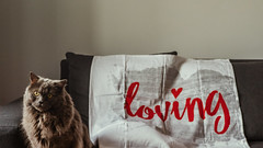 25.01.2018 (Fregoli Cotard) Tags: pillowcase pillowfit bedsheets catforscale freckols britishlonghair britishcat british grey greykitty greywalls fluffycat interiordesign sofa couch christmaspresents funnypresents calographysheets bedding caligraphy dailyjournal dailyphotography dailyproject dailyphoto dailyphotograph dailychallenge everyday everydayphoto everydayphotography everydayjournal aphotoeveryday 365everyday 365daily 365 365dailyproject 365dailyphoto 365dailyphotography 365project 365photoproject 365photography 365photos 365photochallenge 365challenge photodiary photojournal photographicaljournal visualjournal visualdiary 25365 25of365