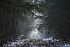 Waldweg (malp007) Tags: wald forest nature naturephotography skov trail weg woods winter trees zweige