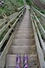 Life is about adapting to changes every steep step of the way. (Late Breaks Devon) Tags: steep steps wellies boots wellingtons wood walkway wooden spekes mills hartland north devon late breaks winter walks coast coastline
