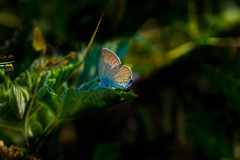 Trapped in the light (Mustafa Kasapoglu) Tags: light lighttrails butterfly insect natu mothernature reflections colors