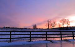 Horse farm at dawn (Daniel Q Huang) Tags: sunrise dawn blue hours farmlad winterscape snow