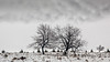 High Fens 04 (L I C H T B I L D E R) Tags: belgium winter tree trees stamm trunk belgien baraque michel hohesvenn highfens eupen malmedy hautesfagnes wood forest snow wald holz baum schnee moor bog swamp heide marsh fen himmel landschaft feld gras baraquemichel bedeckt