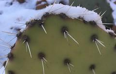 Snow Topper (cogdogblog) Tags: snow cactus