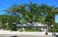 Key West (Florida) Trip 2017 7440Ri (edgarandron - Busy!) Tags: florida keys floridakeys keywest house houses building buildings tree trees royalpoinciana