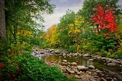 Jackson creek (FotoFloridian) Tags: yellow autumn nature forest leaf tree landscape outdoors scenics stream beautyinnature water river woodland season greencolor lushfoliage tranquilscene newhampshire jackson ellisriver sony a6000