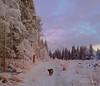 Run Run Run (evakongshavn) Tags: dog walkingthedog winterish winter landscape landschaft natur nature photo new light coth5 snow white pink frost sundaylights winterlandscape 7dwf