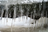 Winter Beast (Gregory Pleau) Tags: ice icicle cold winter snow tree fallen sharp jagged